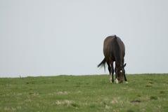 Exploração agrícola do cavalo de Kentucky fotografia de stock royalty free