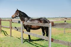 Exploração agrícola do cavalo de Kentucky, paisagem do rancho fotografia de stock