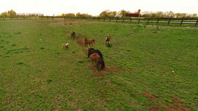 Exploração agrícola do cavalo do Bluegrass filme