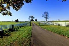 Exploração agrícola do cavalo do puro-sangue de Kentucky fotos de stock