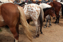 Exploração agrícola do cavalo em Mozhaysk, Rússia imagens de stock royalty free