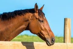 Exploração agrícola do cavalo Head fotos de stock