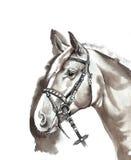 Exploração agrícola do cavalo Head Imagem de Stock Royalty Free