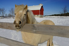Exploração agrícola do cavalo no inverno imagem de stock royalty free