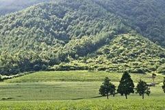 Exploração agrícola do chá verde fotografia de stock royalty free