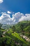 Exploração agrícola do chá verde com azul Fotografia de Stock Royalty Free