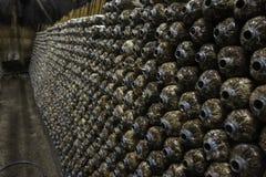 Exploração agrícola do cogumelo Imagem de Stock Royalty Free