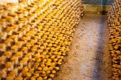 Exploração agrícola do cogumelo de Lingzhi Imagem de Stock Royalty Free