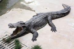 Exploração agrícola do crocodilo Fotos de Stock Royalty Free