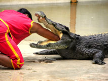 Exploração agrícola do crocodilo de Samutprakan e jardim zoológico 5 fotos de stock