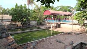 Exploração agrícola do crocodilo em Camboja video estoque