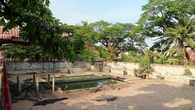 Exploração agrícola do crocodilo em Camboja vídeos de arquivo