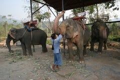 Exploração agrícola do elefante foto de stock
