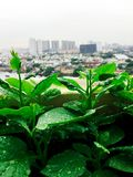 Exploração agrícola do jardim dos vegetais mini no telhado na cidade urbana Imagem de Stock Royalty Free