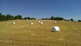Exploração agrícola do marshmallow Foto de Stock
