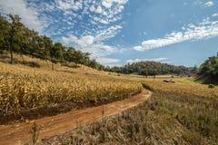 Exploração agrícola do milho Fotos de Stock