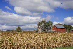 Exploração agrícola do milho e de leiteria fotografia de stock