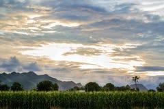 Exploração agrícola do milho no fundo da paisagem Imagens de Stock Royalty Free