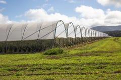 Exploração agrícola do mirtilo, vista geral Foto de Stock Royalty Free