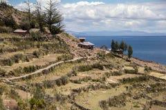 Exploração agrícola do montanhês no lago Titicaca Fotos de Stock Royalty Free