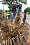 Exploração agrícola do pato Fotografia de Stock