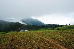Exploração agrícola do repolho foto de stock