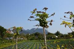 Exploração agrícola do sul de China com montanhas Fotografia de Stock Royalty Free