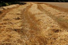 Exploração agrícola do trigo Fotografia de Stock Royalty Free