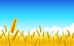 Exploração agrícola do trigo Imagens de Stock
