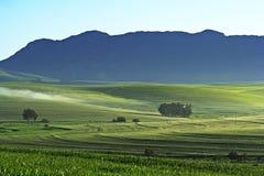 Exploração agrícola do trigo Fotos de Stock