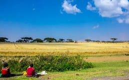 Exploração agrícola do trigo Fotografia de Stock