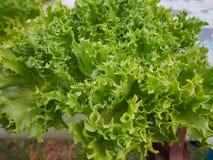 Exploração agrícola do vegetal da hidroponia Fotografia de Stock