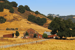 Exploração agrícola do verão fotografia de stock