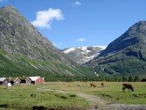 Exploração agrícola do verão em Noruega Imagens de Stock Royalty Free