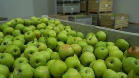 Exploração agrícola do verde da caixa das maçãs video estoque