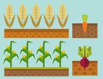 Exploração agrícola do vetor que colhe a ilustração natural saudável do vegetal do vegetariano da terra da horticultura da agricu ilustração do vetor