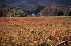 Exploração agrícola do vinhedo no vale de Hexriver Imagem de Stock Royalty Free