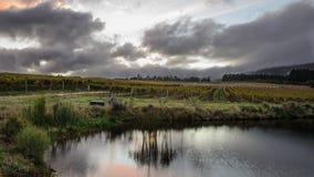 Exploração agrícola do vinho Foto de Stock