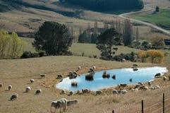 Exploração agrícola dos carneiros - lagoa na queda foto de stock royalty free