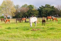 Exploração agrícola dos potros dos cavalos Imagens de Stock