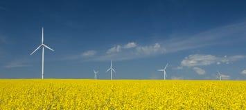 Exploração agrícola dos windturbines perto do campo da violação Imagens de Stock