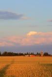 Exploração agrícola dourada (ao norte de Toronto) Fotos de Stock