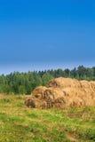 Exploração agrícola dourada dos pacotes de feno Fotografia de Stock