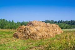 Exploração agrícola dourada dos pacotes de feno Imagens de Stock Royalty Free
