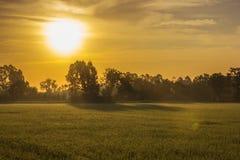 Exploração agrícola e árvores do arroz da paisagem com luz solar Fotos de Stock Royalty Free