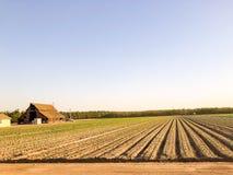 Exploração agrícola e agricultura em Califórnia central fotografia de stock
