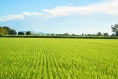 Exploração agrícola e céu Foto de Stock