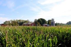 Exploração agrícola e campo de milho fotografia de stock royalty free
