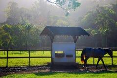 Exploração agrícola e cavalo Fotos de Stock Royalty Free