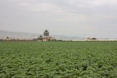 Exploração agrícola e jardins vegetais e estufas Imagem de Stock Royalty Free